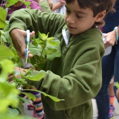 Seven Arrows Edible Garden 10