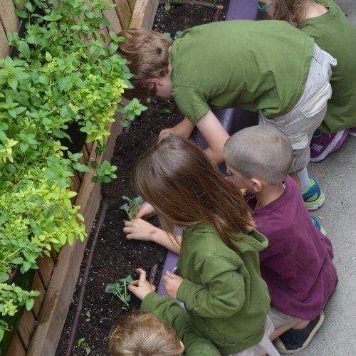 Seven Arrows Edible Garden 9