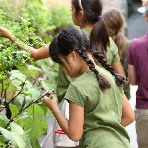 Seven Arrows Edible Garden 6